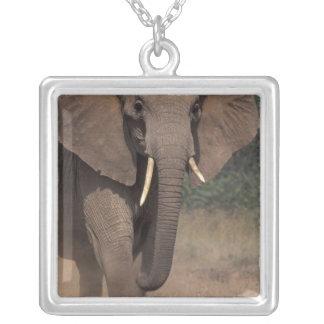 Collier L'Afrique, Kenya, Nanyuki, Mpala. Éléphant