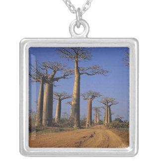 Collier L'Afrique, Madagascar, Morondava, avenue de baobab