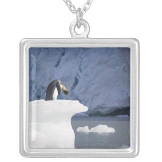 Collier L'Antarctique, île du sud de la Géorgie (R-U), roi