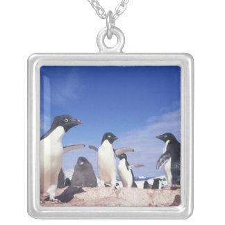 Collier L'Antarctique, Pygoscelis de pingouin d'Adelie