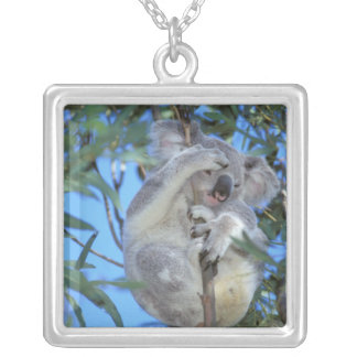 Collier L'Australie, koala Phasclarctos Cinereus)