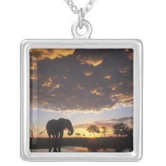 Collier Le Botswana, parc national de Chobe, éléphant