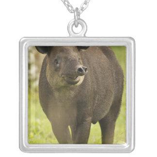 Collier Le Costa Rica. Bairdii de Tapirus de tapir de
