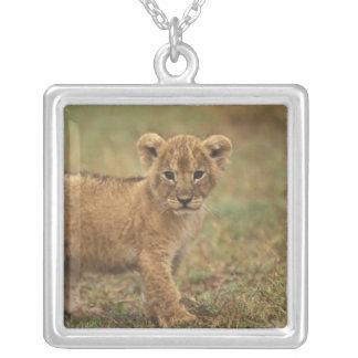 Collier Le Kenya. Lion CUB (Panthera Lion)
