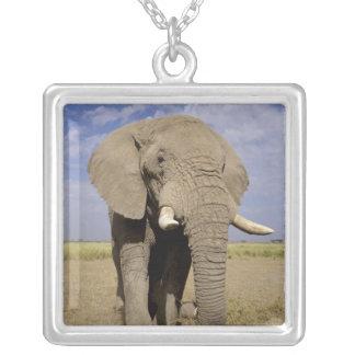 Collier Le Kenya : Parc national d'Amboseli, éléphant