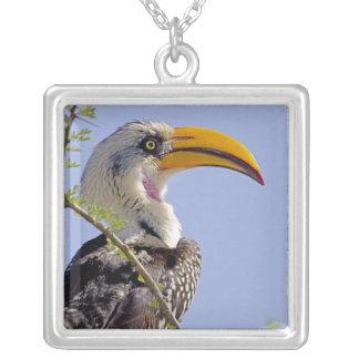 Collier Le Kenya. Profil d'oiseau jaune-affiché de calao
