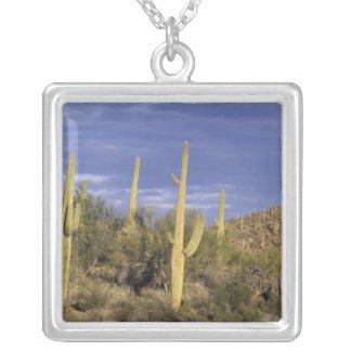 Collier Le Mexique, Baja del Norte, ressortissant 2 de
