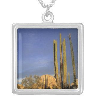 Collier Le Mexique, Baja del Norte, ressortissant de