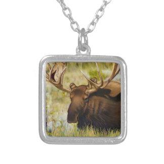 Collier Le Roi Moose Taureau de Teton