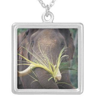 Collier Le Sri Lanka, alimentations d'éléphant à