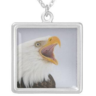 Collier Les Etats-Unis, Alaska, Homer. Aigle chauve