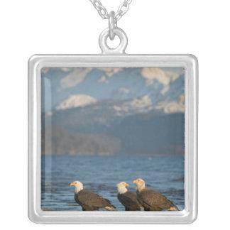 Collier Les Etats-Unis, Alaska, Homer, Haliaeetus d'Eagles