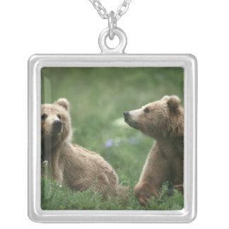 Collier Les Etats-Unis, Alaska, ours bruns de sous-adulte