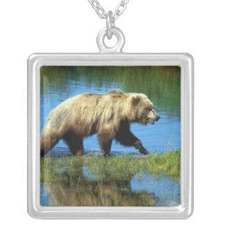 Collier Les Etats-Unis, Alaska, parc national de Katmai,