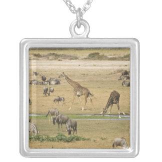 Collier Les gnous, les zèbres et les girafes recueillent à