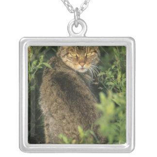 Collier Libyca sauvage africain de chat, de Felis),