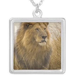 Collier Lion maned de noir de vieil adulte, jeu de Mara de