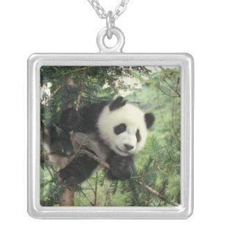 Collier L'petit animal de panda géant grimpe à un arbre,