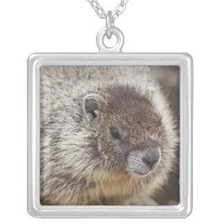 Collier Marmot chez Palouse tombe parc d'état