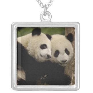 Collier Melanoleuca d'Ailuropoda de bébés de panda géant)
