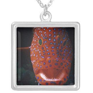 Collier Mérou de bijou, miniata de Cephalopholis