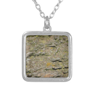 Collier Mousse sur la roche