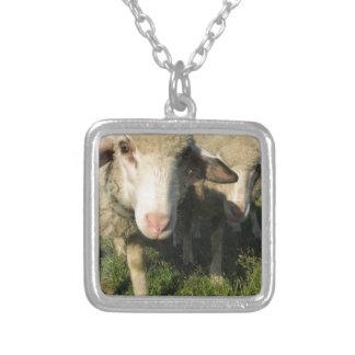 Collier Moutons curieux