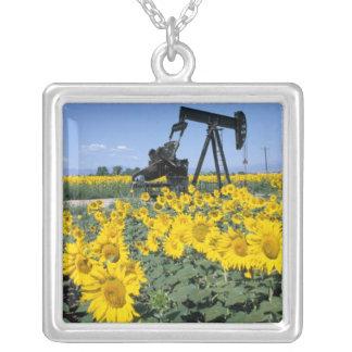Collier Na, Etats-Unis, le Colorado, tournesols, huile
