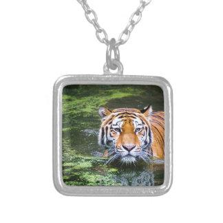 Collier Natation de tigre
