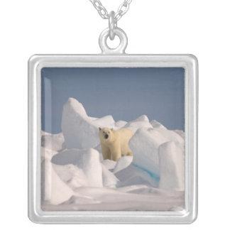 Collier ours blanc, maritimus d'Ursus, en glace rugueuse