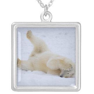 Collier ours blanc, maritimus d'Ursus, petit animal
