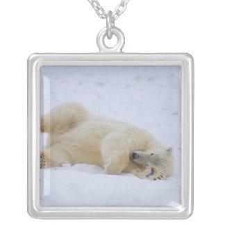 Collier ours blanc, maritimus d'Ursus, roulement de petit