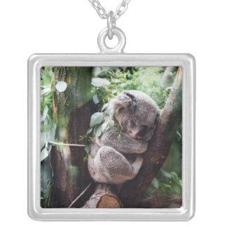 Collier Ours de koala mignon détendant dans un arbre