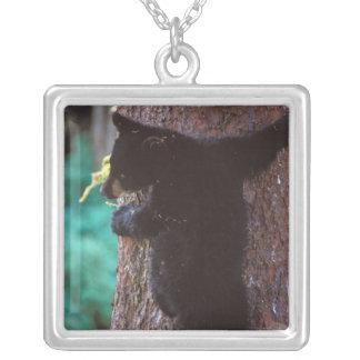 Collier ours noir, Ursus américanus, petit animal de