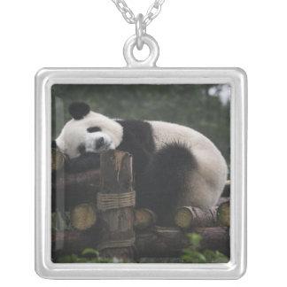 Collier Pandas géants à la protection et aux 3 de panda