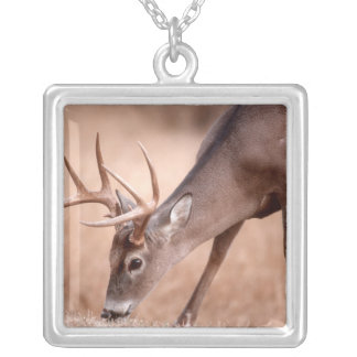 Collier Pâturage masculin de cerf de Virginie