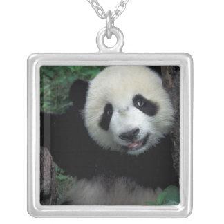 Collier Petit animal de panda avec l'arbre, Wolong,