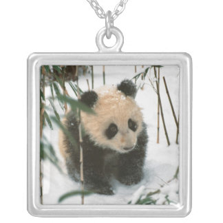 Collier Petit animal de panda sur la neige, Wolong,