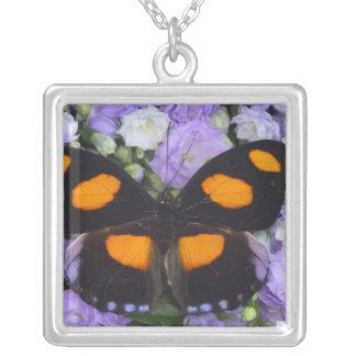 Collier Photographie de Sammamish Washington du papillon 4