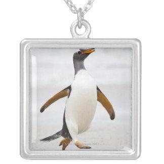 Collier Pingouin de Gentoo