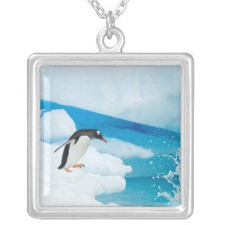 Collier pingouin de gentoo, Pygoscelis Papouasie, sautant