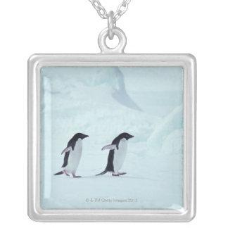 Collier Pingouins d'Adelie, Antarctique