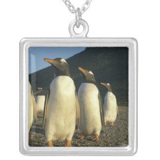 Collier Pingouins de Gentoo, Pygoscelis Papouasie),