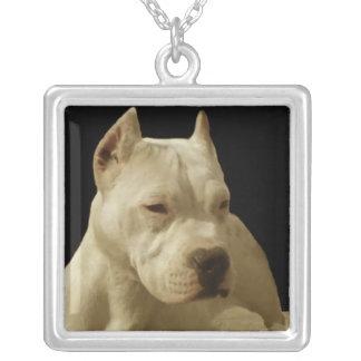 Collier Pitbull blanc Terrier