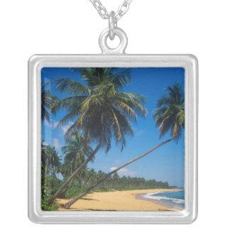 Collier Porto Rico, Isla Verde, palmiers