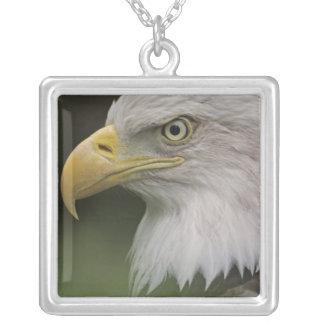 Collier Portrait adulte d'Eagle chauve, Haliaeetus