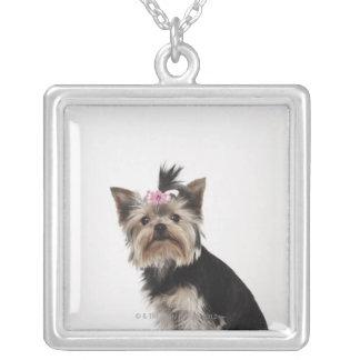 Collier Portrait d'un chien de Yorkshire Terrier