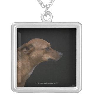 Collier Profil mélangé de chien de race sur l'arrière -