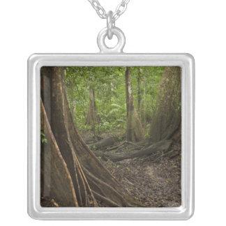 Collier Racines de contrefort. Forêt tropicale, Mapari