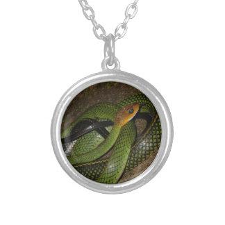 Collier Ratsnake Noir-mis en marge ou serpent de rat vert
